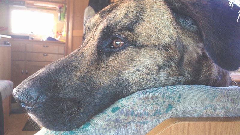 Fimg Mit Hund Im Wohnmobil