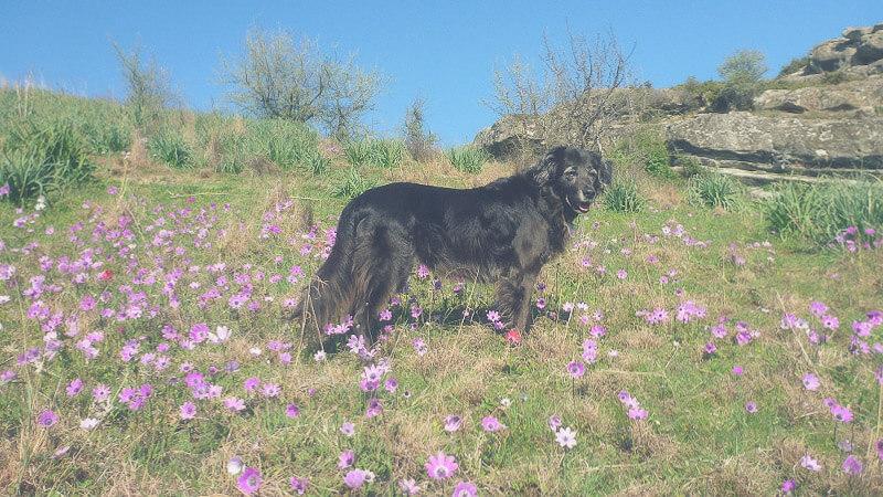 Reisen Und Campen Mit Hund In Griechenland